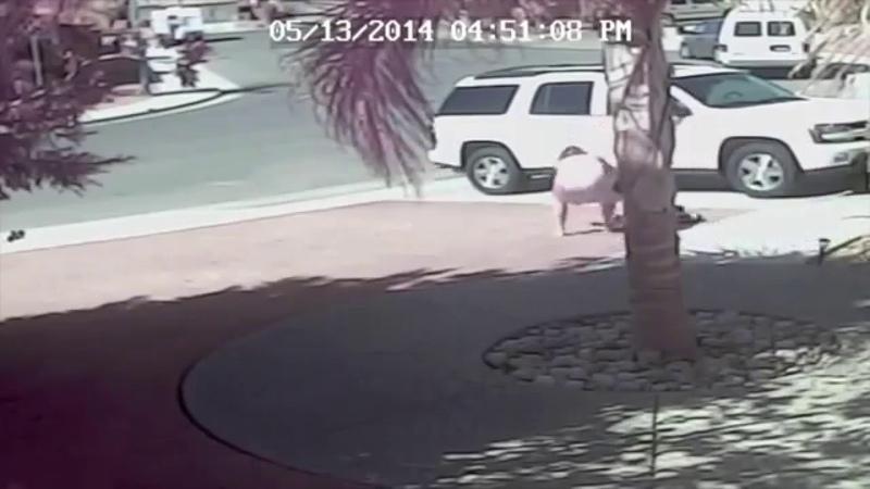 Кот Спас Ребенка от нападения Собаки Кот Защитил Ребенка