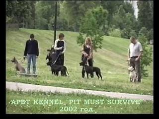 """Американский пит-бультерьер (апбт, пит, питбуль). American Pit Bull Terrier knl """"PIT MUST SURVIVE"""""""