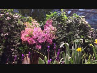 Выставка тюльпанов «Репетиция весны».