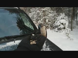 В лесу.. птички.. 5 января (на самсунговский смартфон)