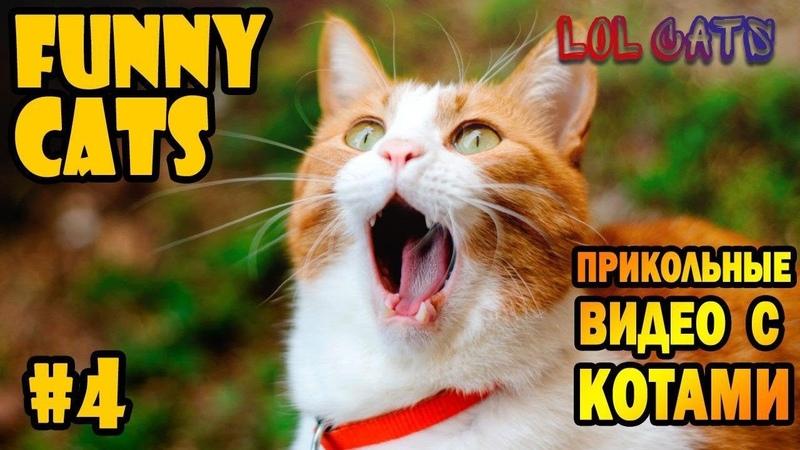 LOL CATS СМЕШНЫЕ КОТИКИ Подборка приколов с котами
