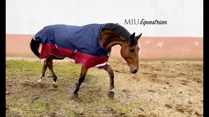 ЗАЩИТА вашей ЛОШАДИ ОТ ДОЖДЯ Попона прогулочная MIU Equestrian Singapore