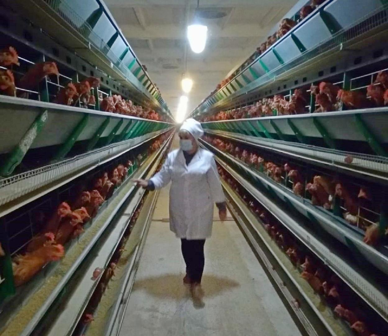 Ветврачи Ростовской области мониторят птицефабрики на инфекционные заболевания