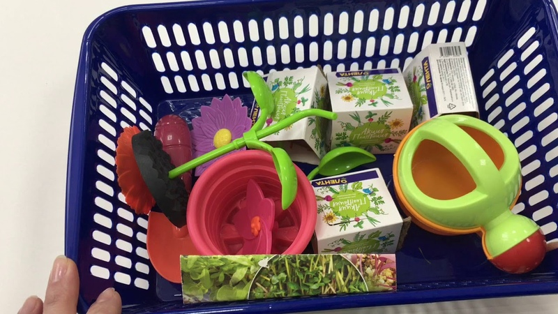 Growing seeds project for kids