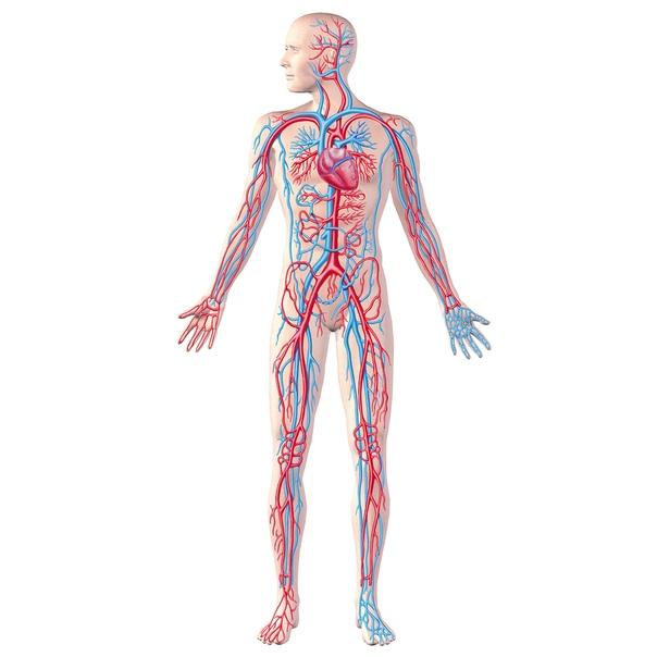 Сердечные дела. Причины заболеваний, изображение №1