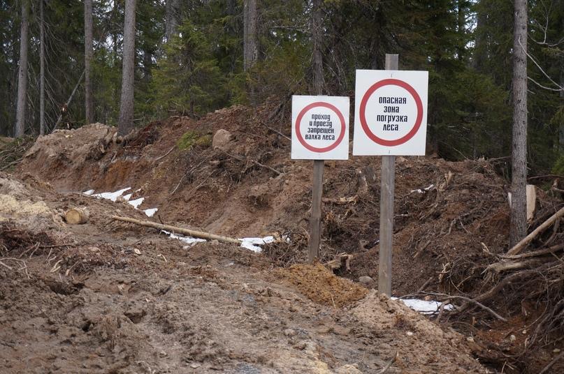 Как сохранить свой лес?, изображение №3