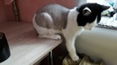 Когда ты не рядом✔ Голый кот - фанат Теплоэнерго
