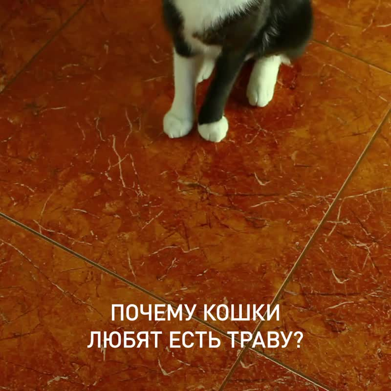 Зачем кошкам трава?