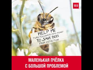 Пчела-блогер пытается спасти свой вид - Москва FM
