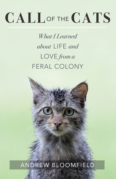 Call of the Cats What I Learned about Life and Love from a Feral Colony by Andrew Bloomfield