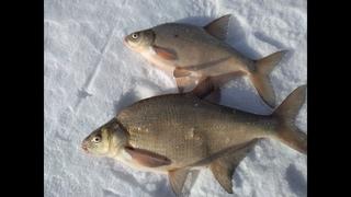 Ловля леща зимой. Рыбалка ЗИМОЙ НА ТЕЧЕНИИ. Проверяем ВЕРТОЛЕТЫ и ДОНКИ!