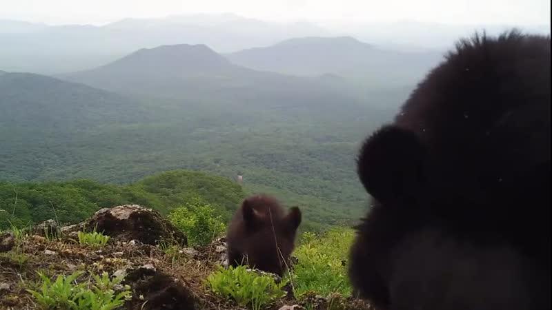 Семейство гималайских медведей забралось на вершину мира и сделало селфи на Земле леопарда
