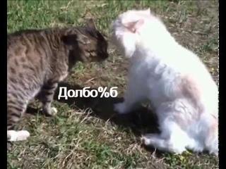 Пьяные *КОТЫ МАТЕРЯТСЯ* приколы/пьяные животные/смешные животные/коты собаки/с новым годом 2020