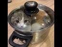 🐈Мега смешные кошки!😺 Подборка приколов с котами и кошками!😺