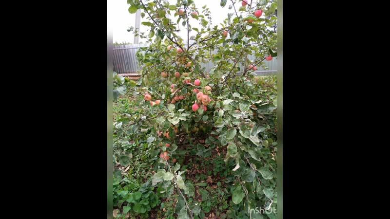 Помосъяльский СДК провел онлайн фотоконкурс садоводов любителей под названием Во саду ли в огороде