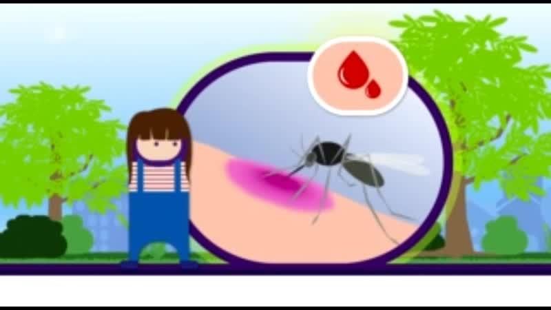 Das Wichtigste über Mücken