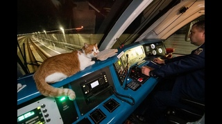 Путешествие кота Мостика из Крыма в Тамань