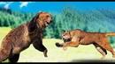 Медведь в ДЕЛЕ! Медведь против пумы, тигра, волков, моржа, и даже коровы и свиньи