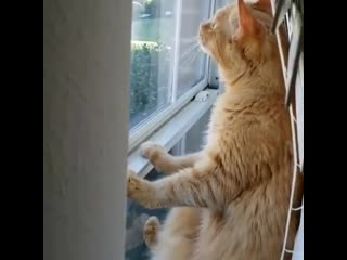 Да этот кот нашел лучший вариант.