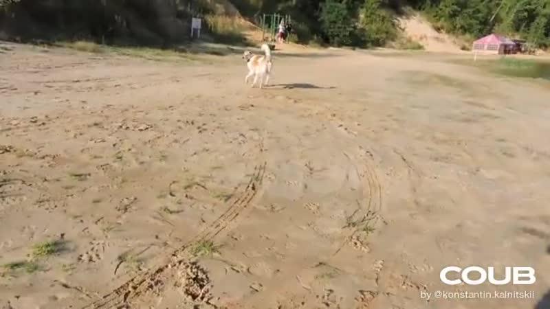 Нападение собаки взгляд со стороны обороняющегося