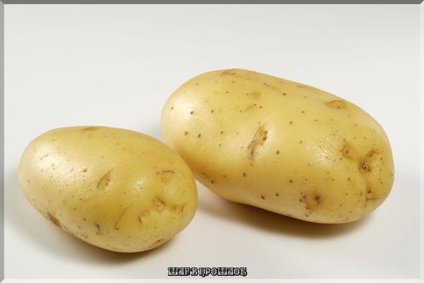 26 августа 1770 г. 241 год назад В «Трудах» Вольного экономического общества появилась первая научная статья на тему картофеля «Примечания о картофеле»Первая картошка попала в Россию из Западной