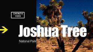 Joshua Tree National Park Cinematic Travel Video