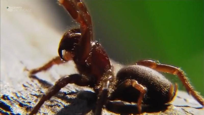 Дикая природа Австралии Самые опасные животные Австралии National Geographic