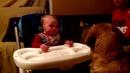 Посмотрите это видео на Rutube: «Малыш смеётся над собакой»