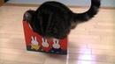 Кошки любят коробки.