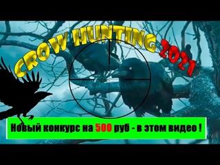 Охота на ворон или с Новым 2021 Годом. Crow Hunting. Новый Конкурс на 500 руб. Jack Hunter.