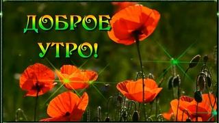 Доброе утро! Счастливого понедельника и удачной недели! ☀️🌺🌺🌺.