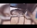 Угарные Котики - Ухахатывайся до слез / Смешные коты и кошки – Funny Cats 2021