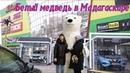 Белый медведь развлекал гостей танцами Мадагаскар 15 12 2019