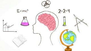 Познавательная анатомия. Мозг. / Cognitive anatomy. Brain.