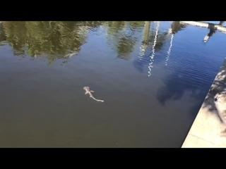 Во Флориду приплыли сотни акул, чтобы спастись от водорослей