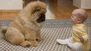 Adorable Puppies Love Babies Compilation 😍 A Cute Puppy 🐶and Baby👶 Videos 2021