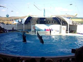 Дельфинарий в Коктебеле (1)