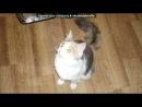 «моя кошка мася» под музыку Каста - Она сама по себе, она со всеми и не с кем…она нужна всем, и не нужна никому..в ее зеленых глазах легко можно прочесть, что она принадлежать никогда не сможет одному.. (песня про кошку).
