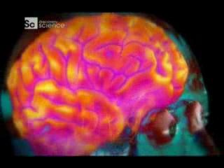 Discovery science. наше тело: уникальная машина: мозг / discovery science. human body. ultimate machine (2013)   karrab.ru