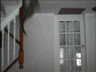 Летающий кот-ниндзя