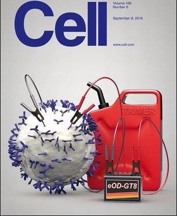 Cell - 8 September 2016