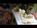 Обед в семействе кроличей . трое малышей все ждут и ждут своих хозяев . Где ты , добрый человек ? ттсэмбель школатанцевказань