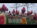Мумий Тролль — Медленные танцы (Lyric video)