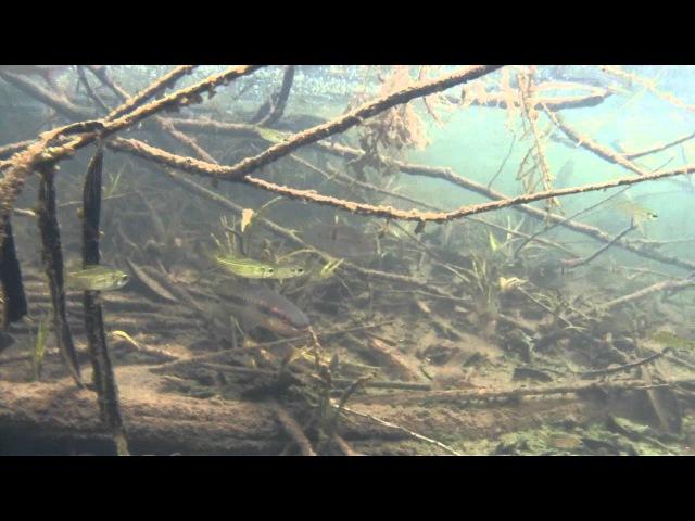 Биотоп реки Рио Арираха Южная Америка Амазония Бразилия