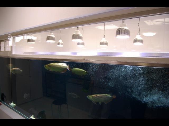 4 000gallon us The ultra monster fish tank for breeding Arowana and Pirarucu
