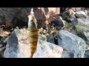 MAN Drive - Рыбалка на спининг в Чите или как приготовить мандулу