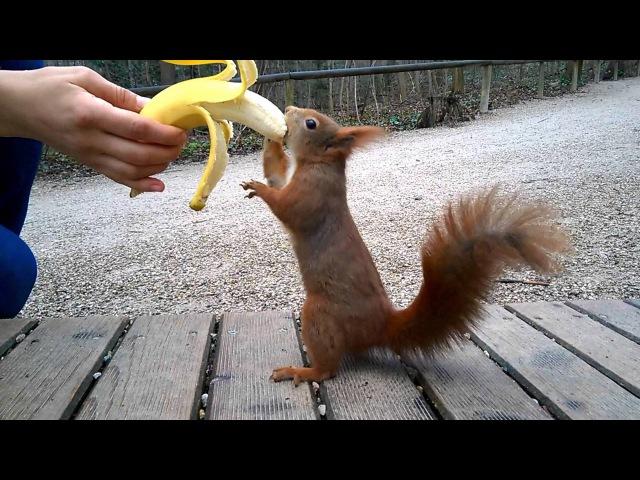 Hungry Squirrel Eating Banana