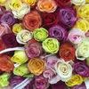 Цветы .....