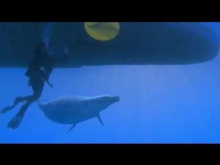 Прогулки с морскими чудовищами 2 В челюстях смерти
