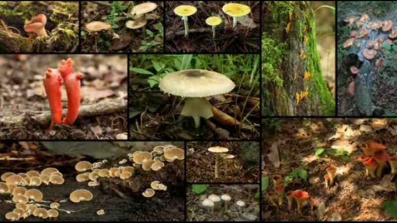 Яд. Достижение эволюции Poison an Evolutionary Mystery 3 из 3 2015 03. Ядовитая война растений и животных